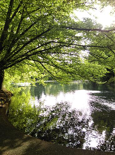 Firwood Lake